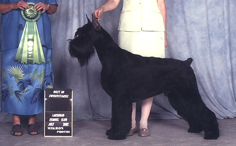 Zydeco wins best in show all breed sweepstakes in Canada