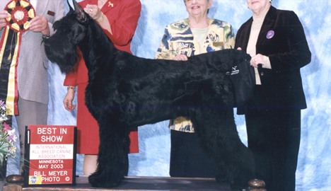 Zydeco - Best in Show